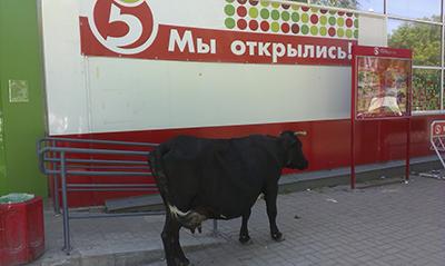 2015 Усть-Катав (Июнь)